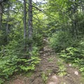 Upward and onward over rocks and roots.- Pillsbury Mountain Fire Tower