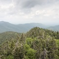 View from the fire tower.- Snowy Mountain Fire Tower
