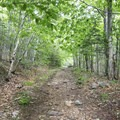 The path begins on a former logging road.- Blue Mountain Fire Tower