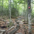 Some wooden planks to help keep your feet dry.- Blue Mountain Fire Tower