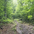 The trail traverses through northern hardwoods.- Owl's Head Fire Tower