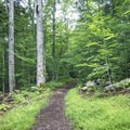 The narrow worn path continues through the woods.- Owl's Head Fire Tower