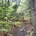 Mixed conifer forest near the top of the mountain.- Owl's Head Fire Tower