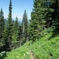 Horsepasture Mountain Trail. - Horsepasture Mountain Trail