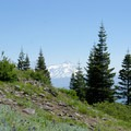 Views of the Cascade Mountains come into view near the summit. - Horsepasture Mountain Trail