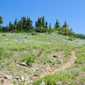 Wildflowers cover the landscape near the summit. - Horsepasture Mountain Trail