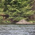 A beaver lodge on Rollins Pond.- Rollins Pond Loop