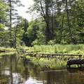 A few logs and marsh areas on Fish Creek.- Rollins Pond Loop