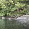 A common merganser (Mergus merganser) on Rollins Pond.- Rollins Pond Loop
