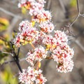 Wildflowers blooming near the trail.- Glider Port Trail to Black Mountain