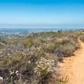 The trail descends through chaparral. - Glider Port Trail to Black Mountain