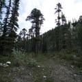 Transition from the path to the trail in forest cover.- Erosion Pillar Trail