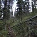 Typical section of forest trail.- Erosion Pillar Trail