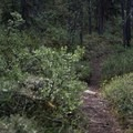 Typical section of the trail. - Erosion Pillar Trail