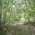 A wide former logging road is your path.- Poke-O-Moonshine Fire Tower