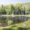 A beaver's lodge in the middle of its constructed pond.- Poke-O-Moonshine Fire Tower