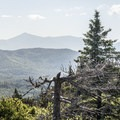 Treetops backed by some of the high peaks to the west.- Poke-O-Moonshine Fire Tower