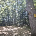 The trail intersection with Goose Pond.- Pharoah Mountain