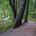 A trail leads through the beautiful Pennsylvania forest.- Cowans Gap State Park