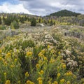 Wildflower field in late summer/early fall at Willow Creek Campground.- Willow Creek Campground