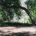 Shade and campsites at Hauser Creek.- Pacific Crest Trail: California Section A