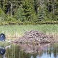 Satellite reception?- Deer River Flow