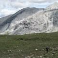 Alpine meadow.- Flower Springs Trail