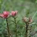 Trailside blooms.- Flower Springs Trail