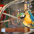Safe Haven also has rescued birds.- Safe Haven Wildlife Sanctuary