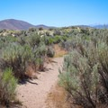 The trail begins through brush as it approaches a sand dune.- North Loop Hiking Trail