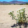 Sand dunes along Washoe Lake. It's scenic, but hard for hiking through.- North Loop Hiking Trail