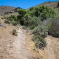 The creek creates a small, lush oasis in an otherwise arid area.- Deadman's Creek