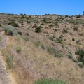 The entire trail is a mellow uphill climb toward the tower.- Deadman's Creek