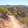 The trail passes through chaparral and sage-scrub.- Martha's Grove Trail Loop