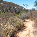 View from Martha's Grove Trail.- Martha's Grove Trail Loop