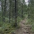 Forest section near the trailhead.- Summit Ridge Trail