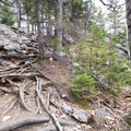Roots and rocks make hiking in the Belknap Range very challenging.- Belknap Range Trail