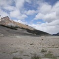 A view of Mount K2 (3090 m) from the parking area.- Athabasca Glacier