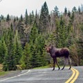 Be prepared to stop! Photo courtesy of Visit New Hampshire.- Moose Alley