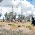 The trail passes by a burned area.- Foster Point