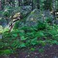 Forest floor along the Pine Mountain Trail.- Wilburn Ridge Loop via Pine Mountain + the Appalachian Trail