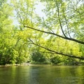 The river is surrounded by a beautiful forest.- Pere Marquette River: Indian Bridge to Scottville Riverside Park