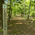 The Logging Trail meanders through the woods.- Ludington State Park Hiking Trails