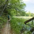 The boardwalk along the Island Trail.- Ludington State Park Hiking Trails