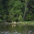 One of the first bays on the Ludington Canoe Trail.- Ludington Canoe Trail
