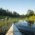Parts of the trail are very marshy.- Ludington Canoe Trail