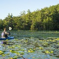 Thick vegetation covers the Carp Ponds.- Ludington Canoe Trail