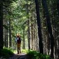 Walking along the forested ridgeline.- Cracker Lake