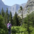 After Canyon Creek, the trail winds through a forest section.- Cracker Lake