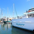 Velocity is one of the boats used by Stagnaro Charters for their harbor cruises and whale watching excursions.- Santa Cruz Whale Watching